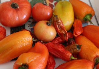 Tomatoes & peppers in November