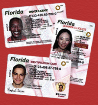 How Much Is A Florida Drivers License - The Best Driver In ...