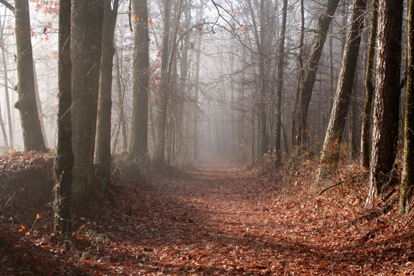 Kentucky Fall Wallpaper 2017 Mound Builders Of Mississippi History And Information