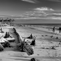 """The Forgotten Coast """"Revisited"""""""