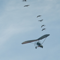 Operation Migration - Whooping Cranes Arrive in North Florida!