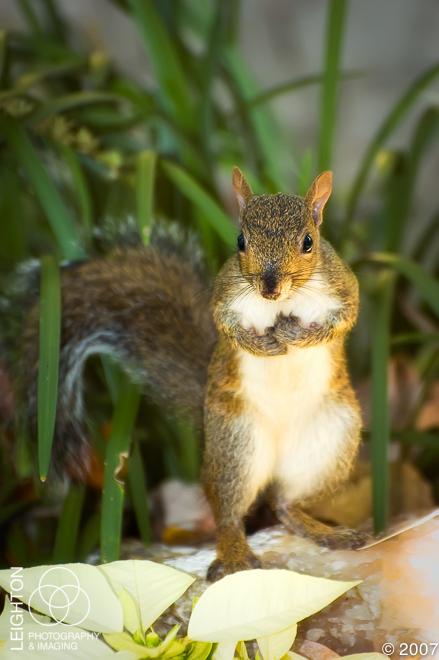 GreySquirrel101