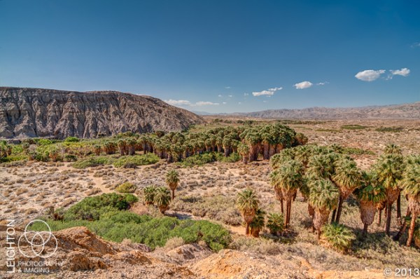 Coachella Valley Oasis