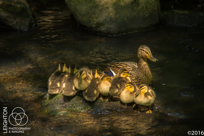 Are All Your Ducklings in a Row? Mine Are.
