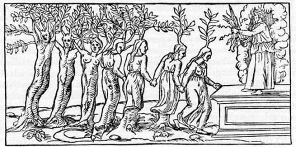 symbolisme-plantes-Lenoble-2