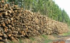 Un appel à manifestations d'intérêt pour faciliter l'exploitation du bois