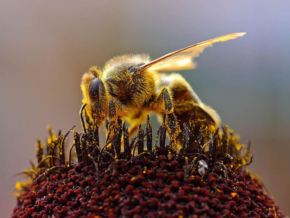 Biodiversité : 10 ruches installées sur la centrale EDF de Bouchain