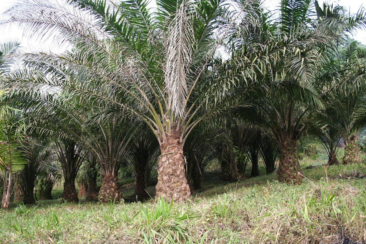 EDF partant pour constuire une centrale biomasse en Côte-d'Ivoire