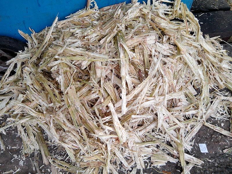 Le soutien gouvernemental à la biomasse renforcé en outre-mer