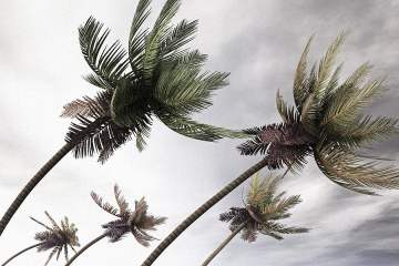 3056375-poster-p-1-inspired-by-palm-trees-these-wind-turbines-bend-and-fold-away-during-hurricanes