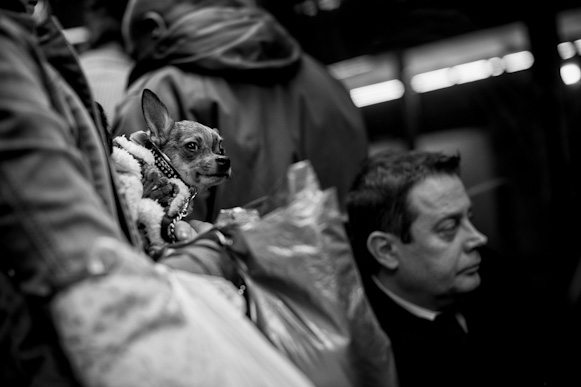 Little dog in the subway