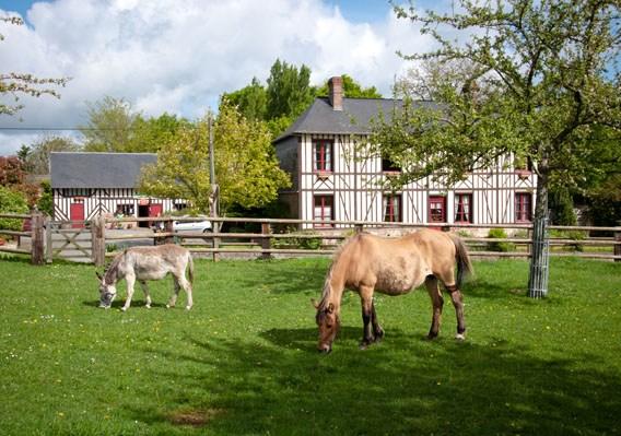 cheval âne bruyères carré normandie