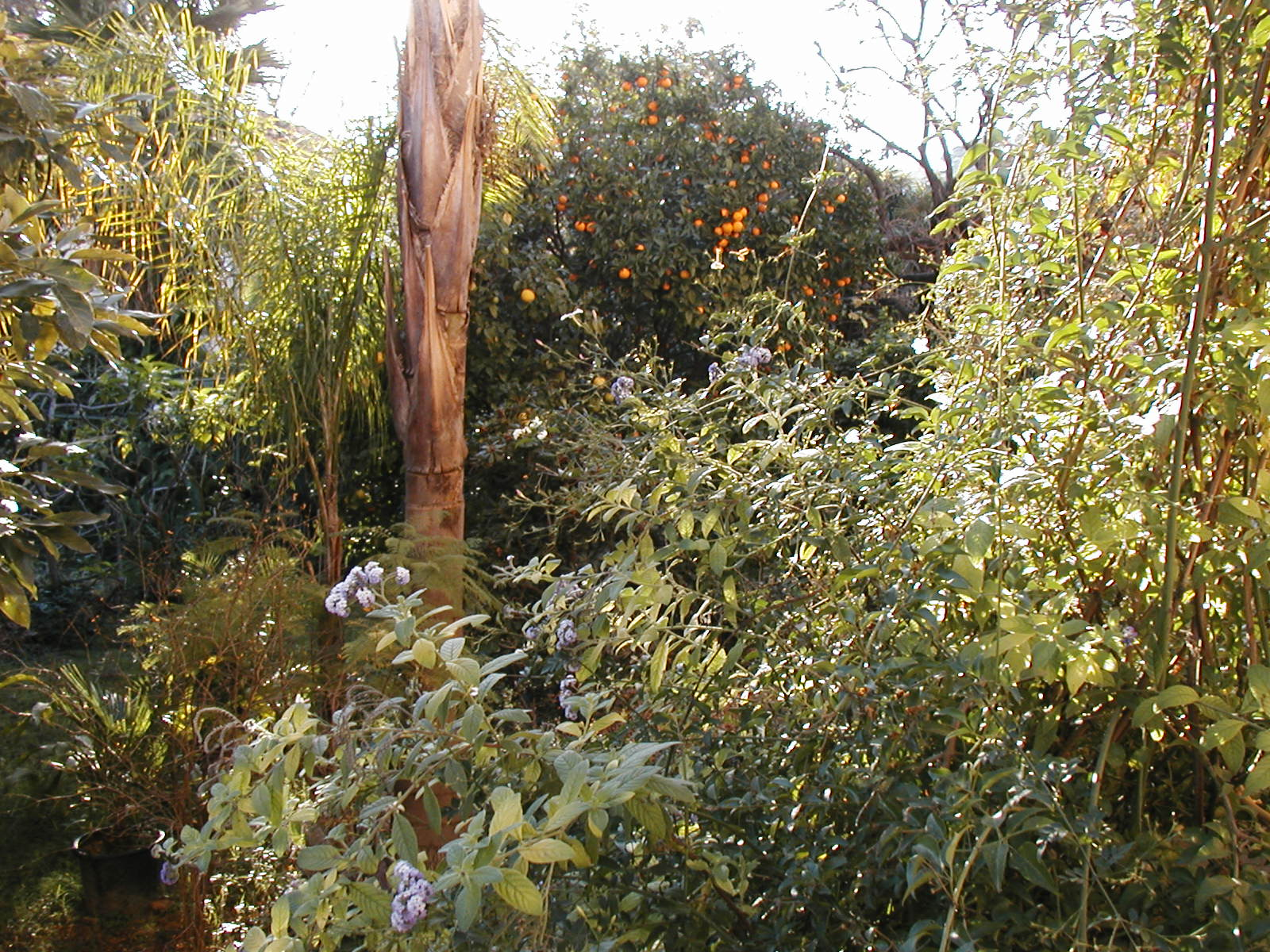 Aventures en permaculture 9 le jardin for t 2 le sauvage for Jardin permaculture