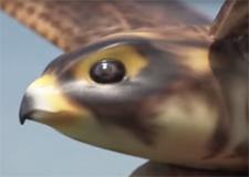 robird225