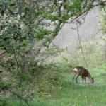 Nature et patrimoine pendant vos vacances à Les Rives du Lac du Laouzas, Tarn (Midi-Pyrénées)
