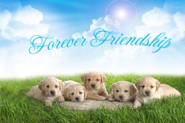cute-dog-happy-friendship