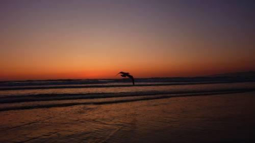 mouette coucher de soleil Venice Beach Los Angeles