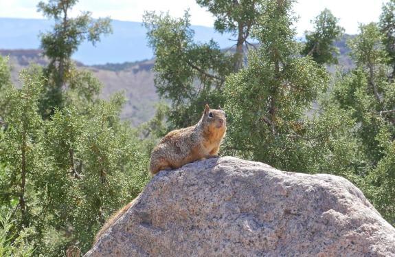 animal sauvage colorado park
