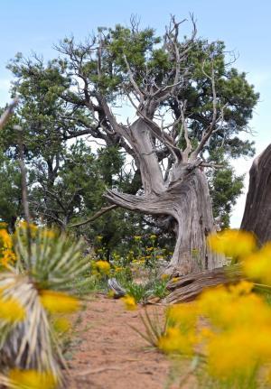 arbre colorado national monument