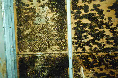 Mold Inspection | What Is Mold