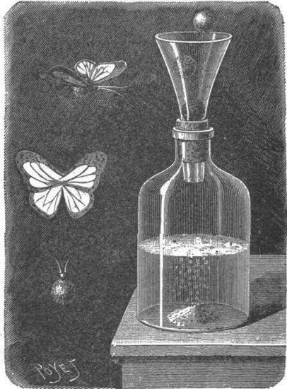 La mariposa automática