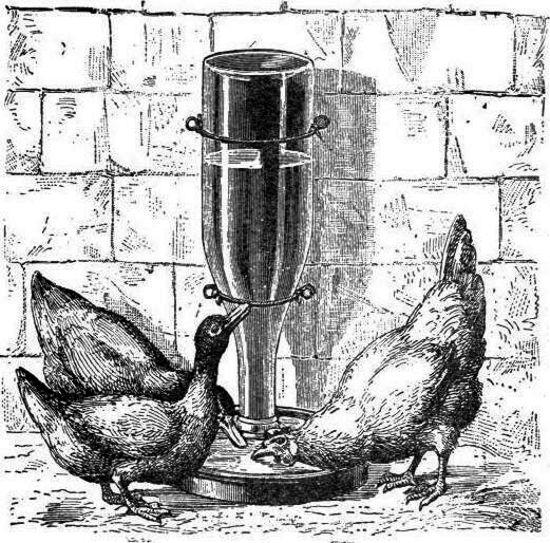 Fuente automática para aves