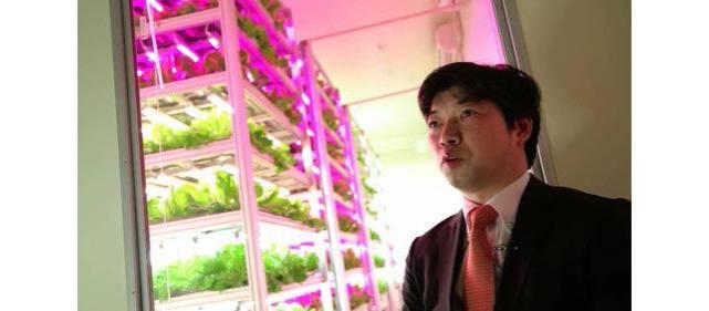 biggest-indoor-farm-produces-10000-heads-lettuce-shigeh-shimamura