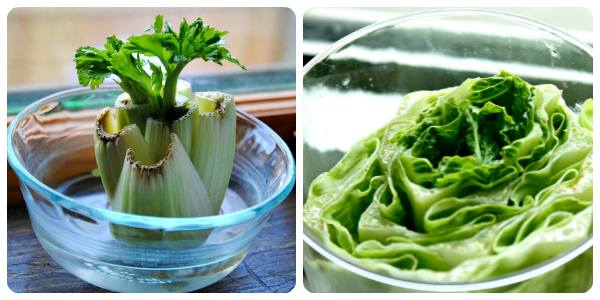 lettuce-foods-that-can-be-regrown