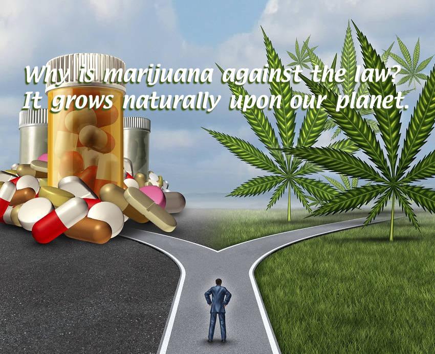 The Truth Behind Medical Marijuana - Infographic