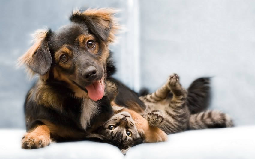 Differences between Cats and Dogs