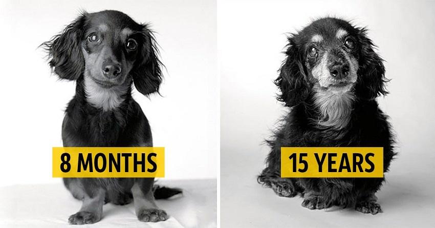 photos aging dogs pups