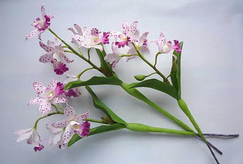 clay-orchid-Cattleya