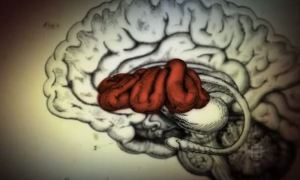 what Ayahuasca Does to Our Brain