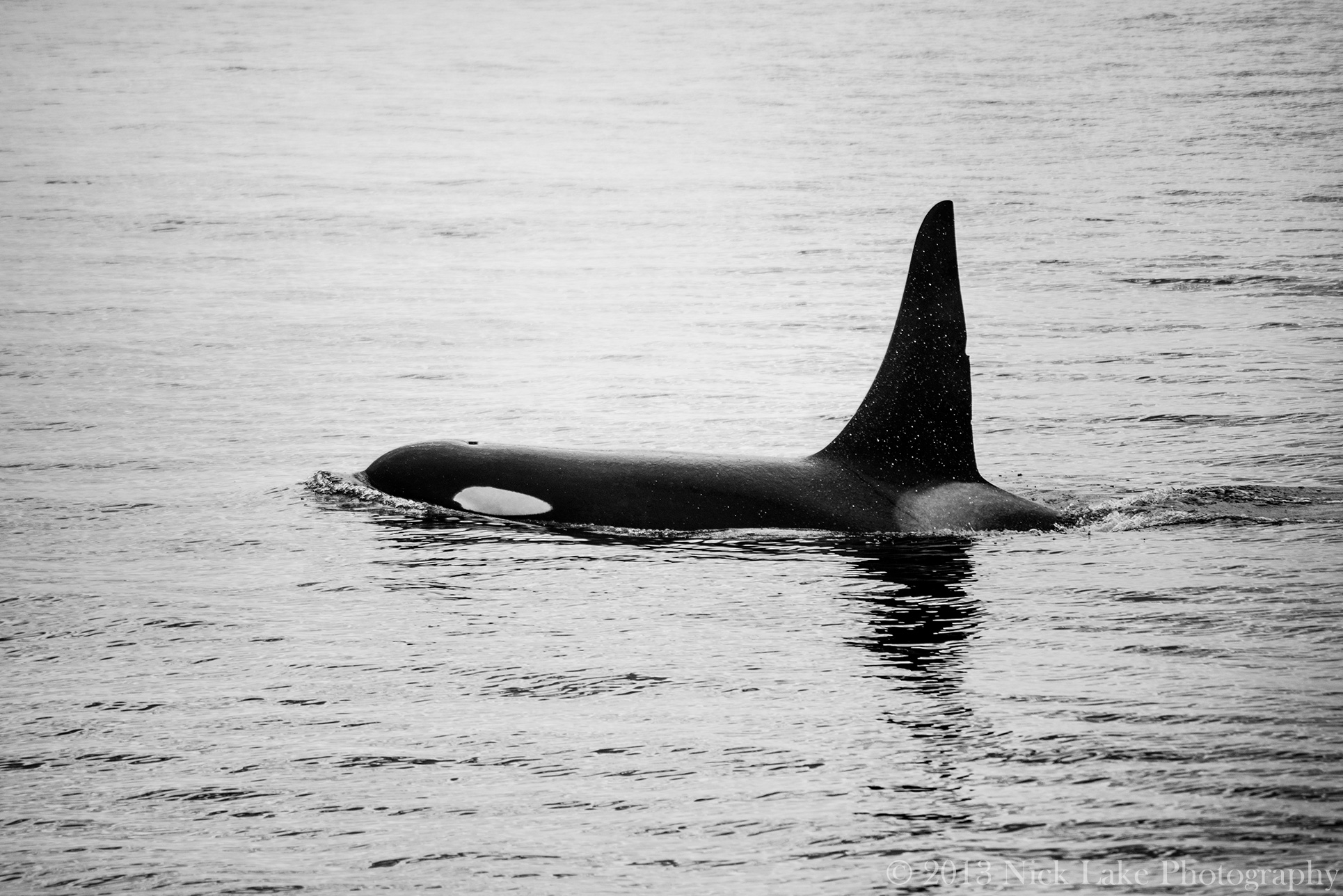 single gay men in orcas What makes orcas island the 'ideal' summer getaway destination  there is no single way to properly raise your kids.