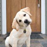 Puppy head tilt