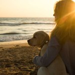 What Is The Dog Lifestyle? Or, Are You A Dog Lifestylist? - beach sunrise