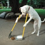 Where Do You Keep Your (Dog's) Poop Bags