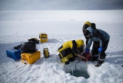 O'brien Bay, Antarctica — Image: Dominic Hall/Australian Antarctic Division