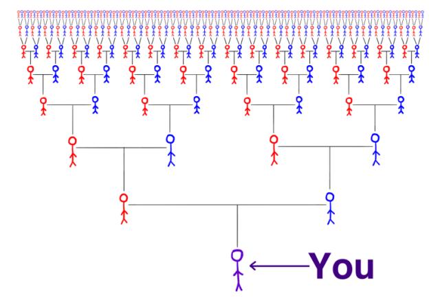 Family Tree — Image from WaitButWhy.com
