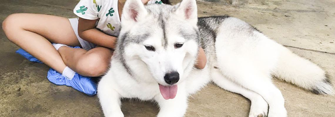 Bangkok True Love Cafe – A Date with the Huskies
