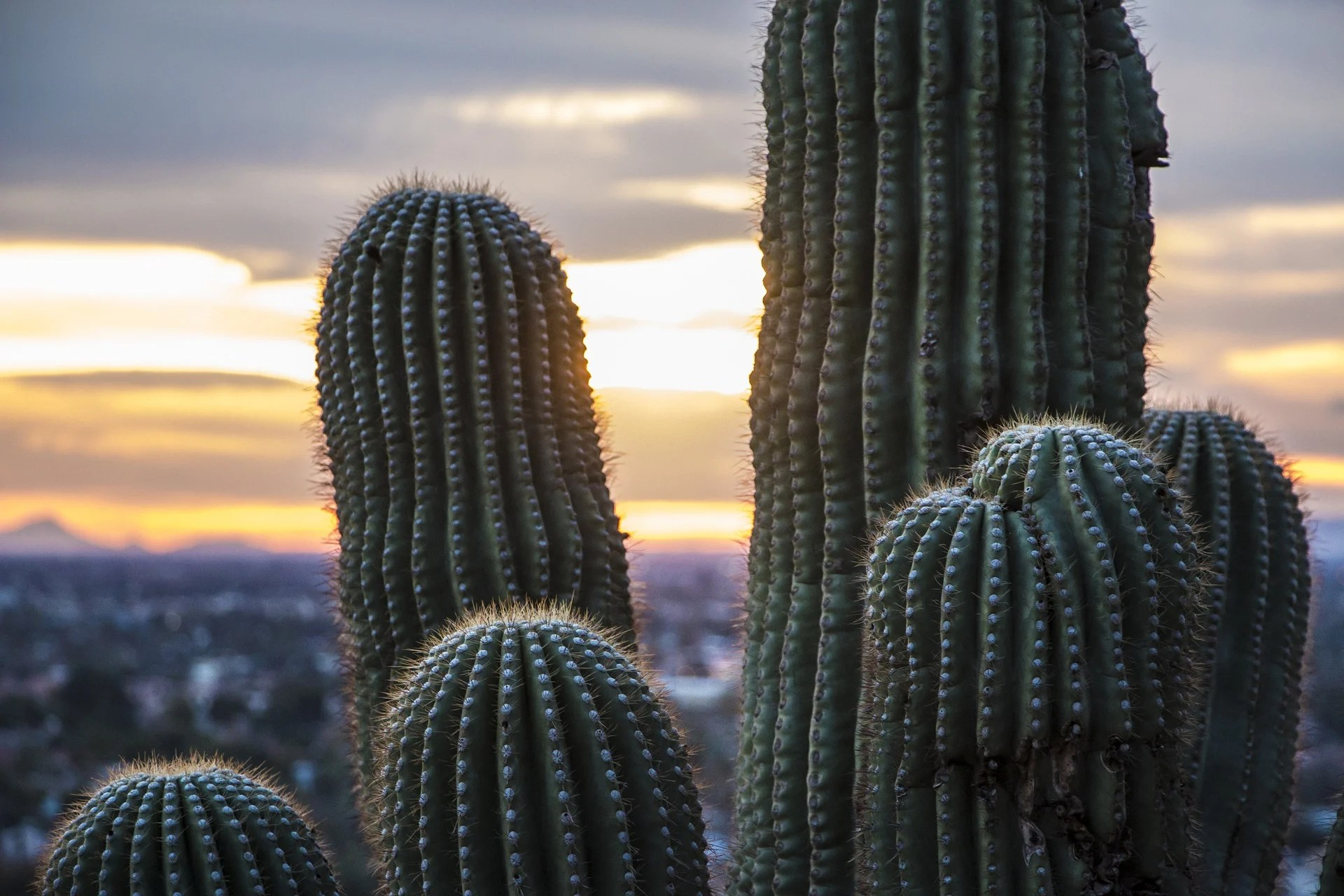 Read This Before Moving To Phoenix