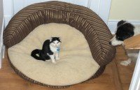 Cats Stealing Dog Beds Compilation | Life With Cats