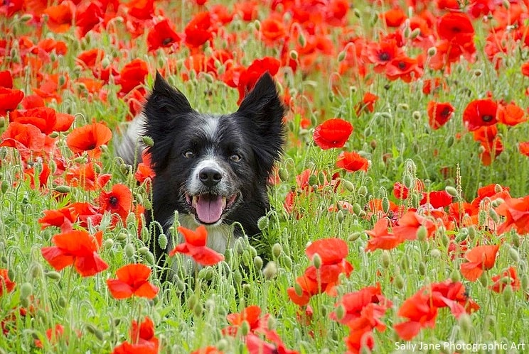 Cute Dog Wallpapers Fot Google Dogs Who Couldn T Be More Delighted That Spring Is Here