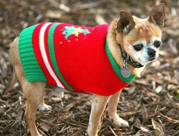 12.17.15 - Dog Ugly Christmas Sweater14
