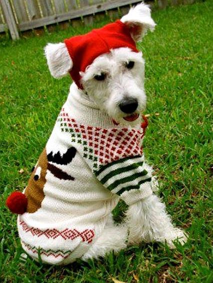 12.17.15 - Dog Ugly Christmas Sweater19