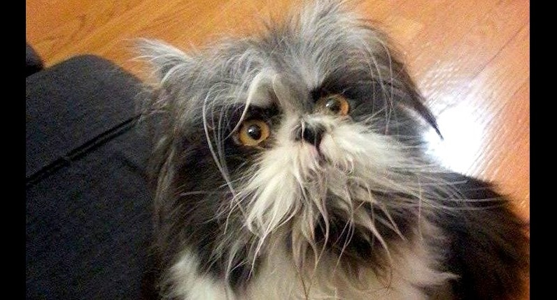 People Are Doing A Double Take Over This Cat Who Looks