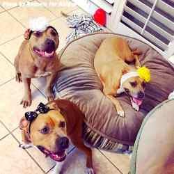 Frantic Headbands What Does A Bait Dog Mean What Is A Dog Bait Bag Former Bait Dog Sent Dozens