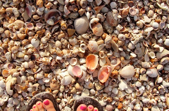 Indian Rocks Beach Seashells