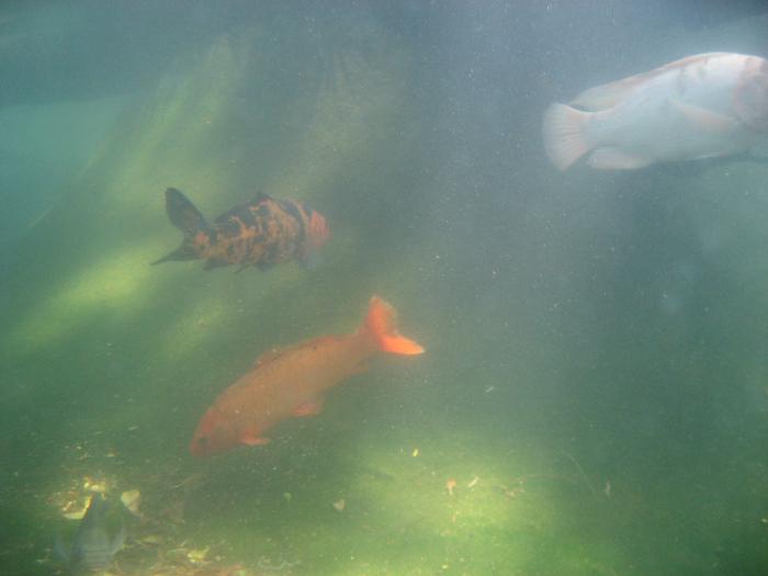 Vista do aquário