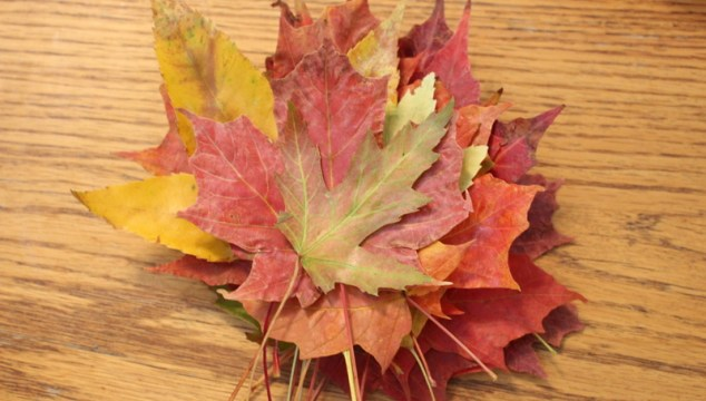 {bits & pieces} and waxing leaves